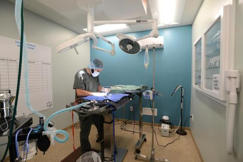 TCV_surgery_4916_res