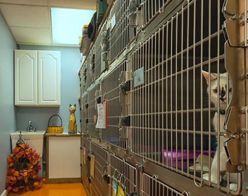15 Feline-boarding-area