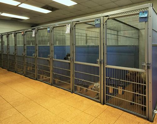 1 Indoor-run-area-for-boarding-dogs