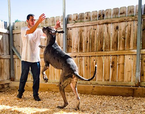 6 Kennel-technician-offering-playtime-to-a-day-boarder